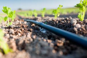 Im gleba lżejsza, tym emitery powinny być rozmieszczone bliżej siebie. Warto też wiedzieć, że w przypadku gleb ciężkich czas nawadniania powinien być krótszy, Fot. Milex