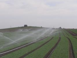 """Podstawową sprawą przy wyborze nawadniania jest rodzaj uprawy. Niektóre rośliny powinny być nawadniane """"od góry"""