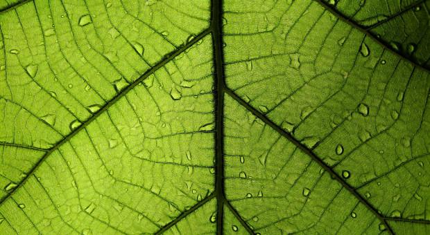 Jak będą pobierane próbki roślin do badań pozostałości śor?