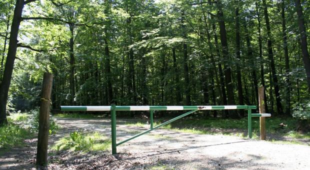 Susza wymusza ponowne zamykanie lasów