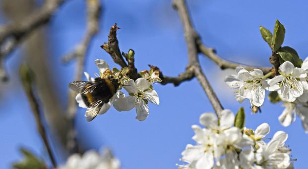 PIORIN apeluje: bezpieczeństwo pszczół jest bardzo ważne!