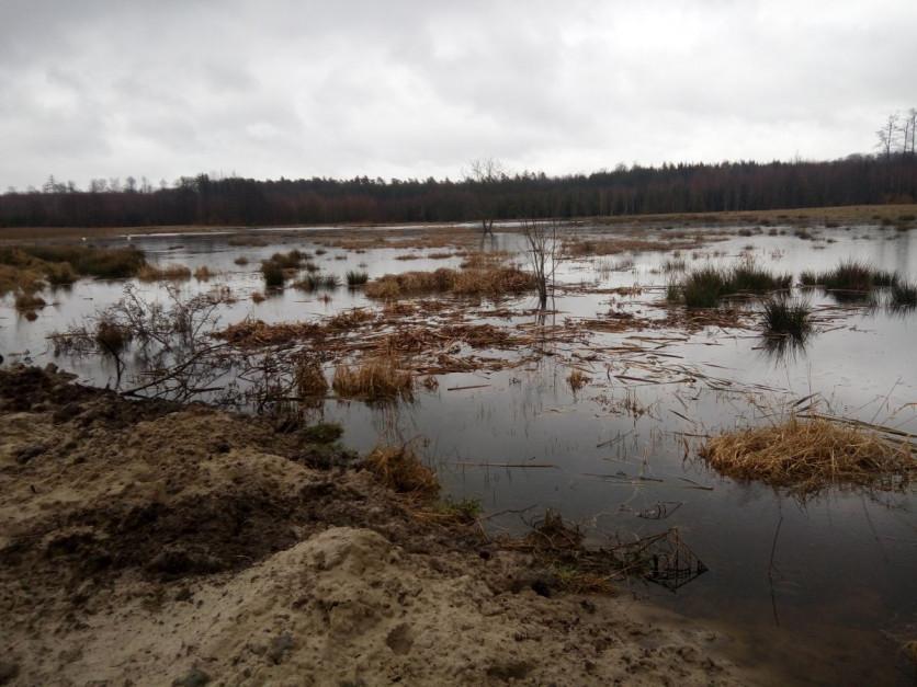 Na łąkach – gdzie powierzchnia nieużytków to prawie 8 ha, dzisiaj mam 4 ha lustra wody. Od 30 cm głębokości do 120 cm, fot. R. Mładanowicz
