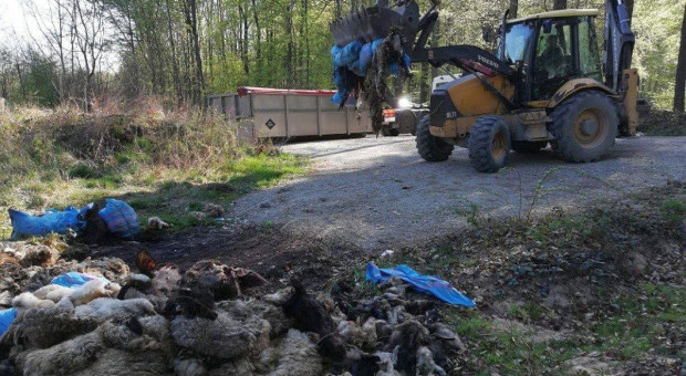 Ponad dwie tony odpadów poubojowych w lesie
