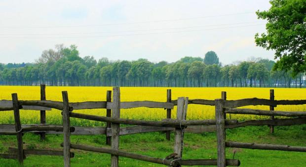 Wkrótce mija termin składania wniosków na restrukturyzację małych gospodarstw