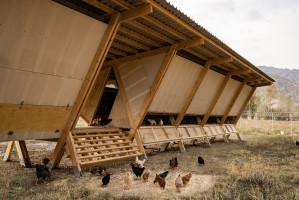 Kurnik odpowiada na wymagania inwestora dzięki zastosowaniu drewnianej konstrukcji, która została umiejscowiona na zregenerowanej ziemi. Zaraz po zakończeniu budowy, w kurniku zadomowiły się kury, które potraktowały go jako schronienie chroniące przed ekstremalnymi warunkami klimatycznymi. Foto. Alí Taptik