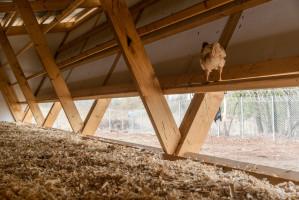 Jako główny materiał wybrano drewno oraz sklejkę, ponieważ imituje ono naturalne środowisko kurcząt, a także uwzględnia lokalne warunki klimatyczne obszaru, który latem staje się bardzo suchy i gorący. Foto. Alí Taptik