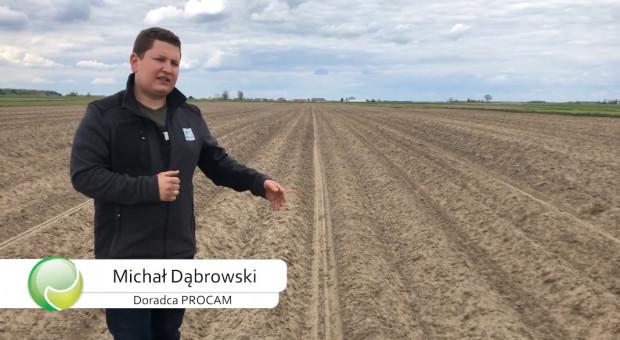 O uprawie ziemniaków w technologii PROCAM z Mazowsza - Doradca Michał Dąbrowski