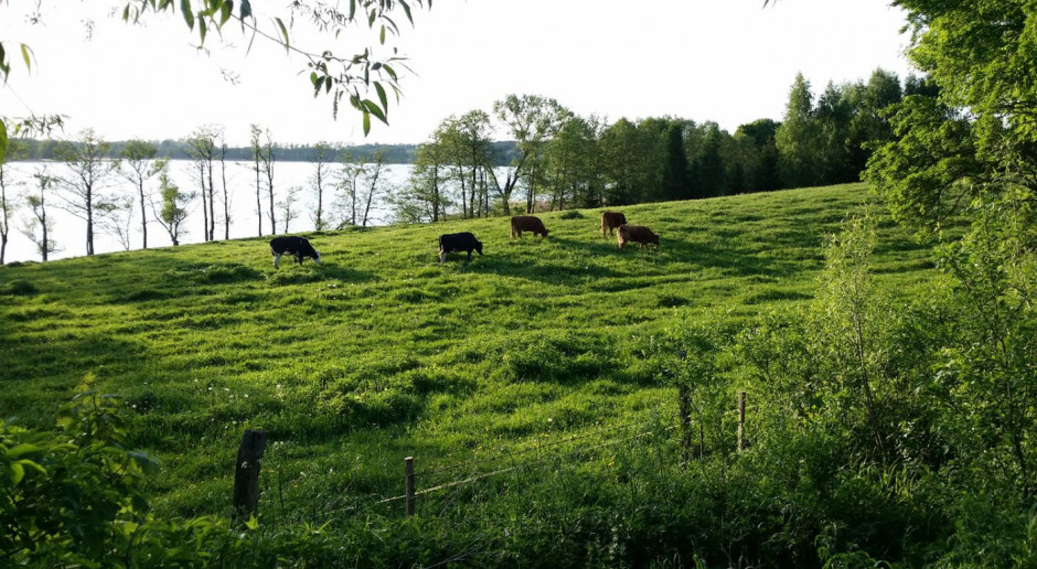 MRiRW proponuje zmiany w przepisach ws. odbierania zwierząt rolnikom
