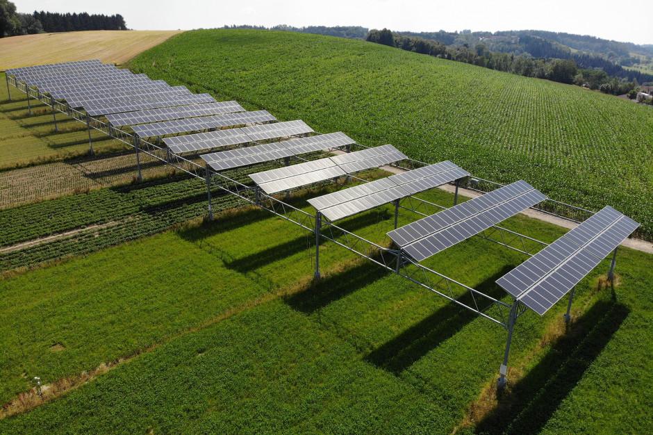 W 2018 r. promieniowanie słoneczne wyniosło 1319,7 kilowatogodzin na mkw., co stanowi wzrost o 8,4 procent w porównaniu z rokiem poprzednim. Wydajność energetyczna układu APV wzrosła o dwa procent do 249,857 kWh, co odpowiada wyjątkowo dobrej wartości wydajności jednostkowej 1285,3 kWh/kWp, Fot. BayWa r.e.
