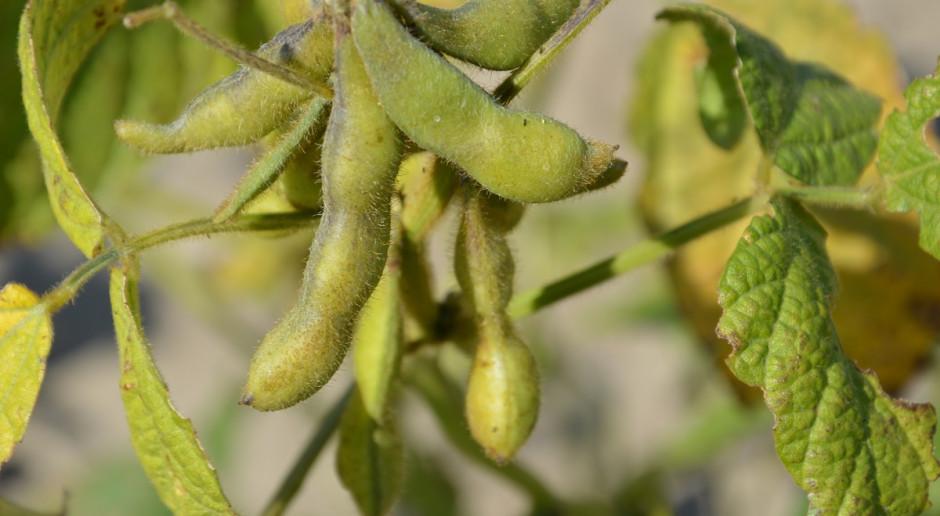 Nawożenie soi azotem i innymi składnikami
