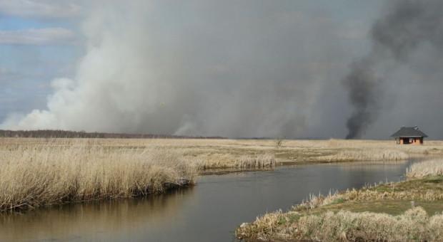 126 tys. zł za wskazanie podpalacza Biebrzańskiego Parku Narodowego