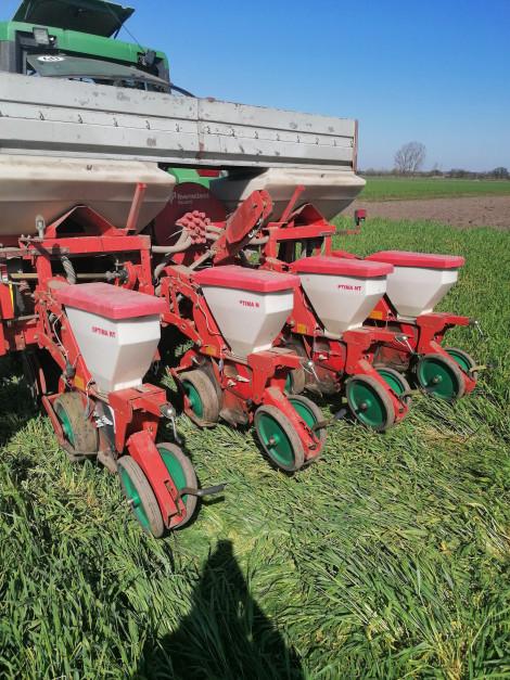 W uprawie zerowej siew odbywa się w nieuprawioną glebę. fot. M.Gniatkowski.
