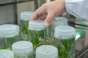 Biotechnologie i nowe techniki upraw sposobem na suszę w rolnictwie