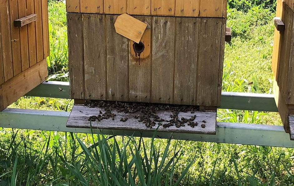 Nieznany sprawca kolejny raz zatruł pszczoły w pasiekach pod Skierniewicami, Foto: Pasieka Słodka Natura