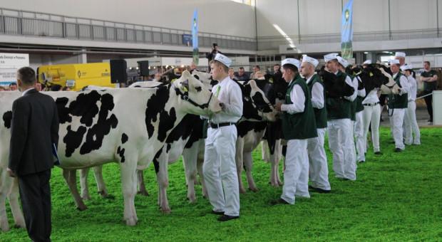 Wystaw bydła hodowlanego w tym roku nie będzie