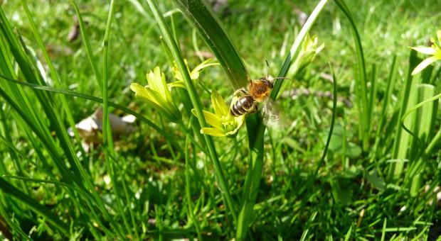 Ochrona pszczół - jakie są dozwolone godziny oprysków?