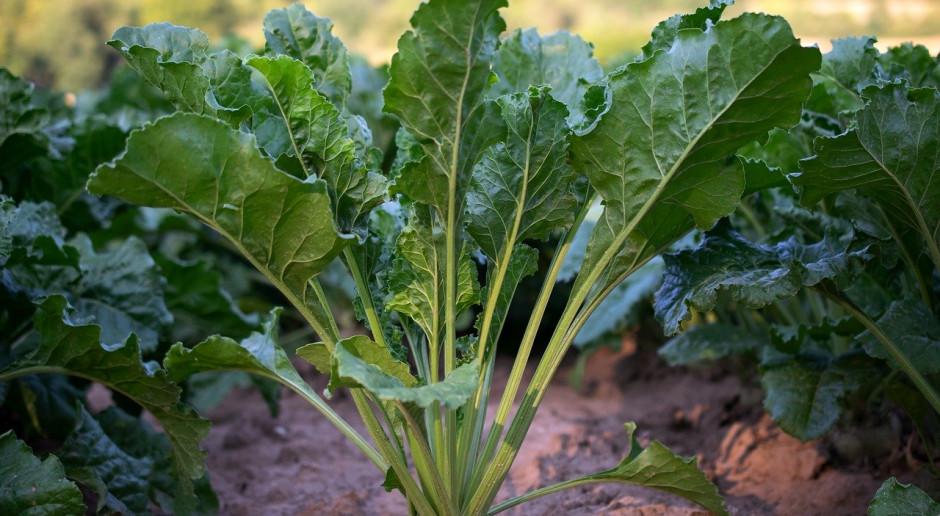 Białoruś oczekuje większych zbiorów zbóż w 2020 roku