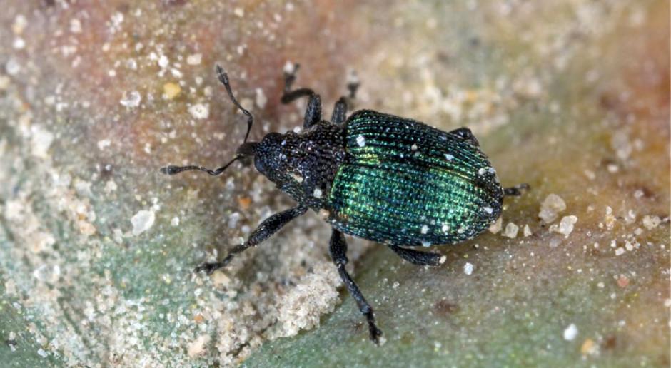 Zwalczanie szkodników po wycofaniu insektycydów