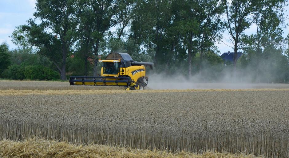 FAO o światowym rynku zbóż w czasie kryzysu koronawirusa