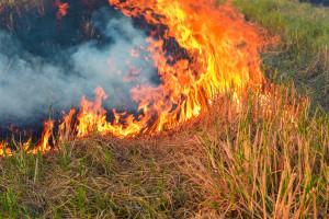 ARiMR: Za wypalanie traw grożą ogromne grzywny i utrata dopłat