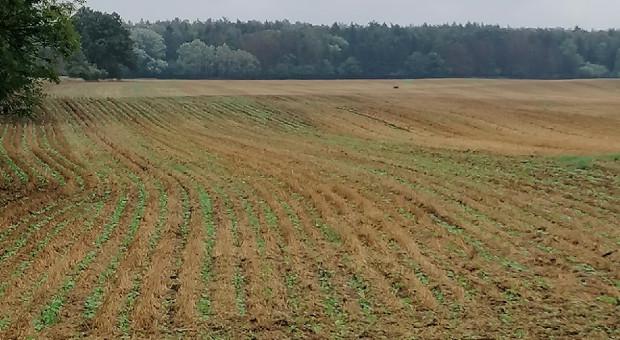 No-till sposobem na poprawę stanu gleby