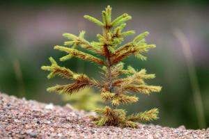 Ruszyło dofinansowanie na wsparcie dla właścicieli lasów prywatnych