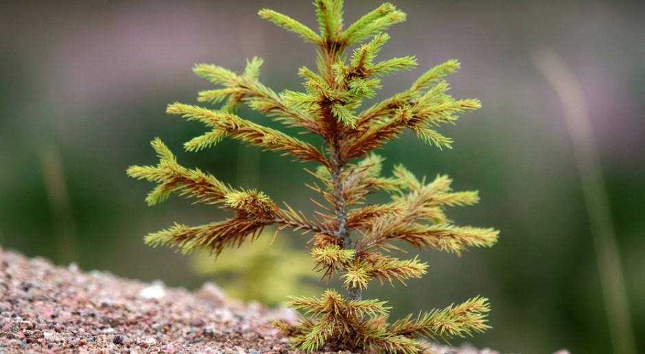 Wsparcie na zalesianie możliwe już od 1 czerwca
