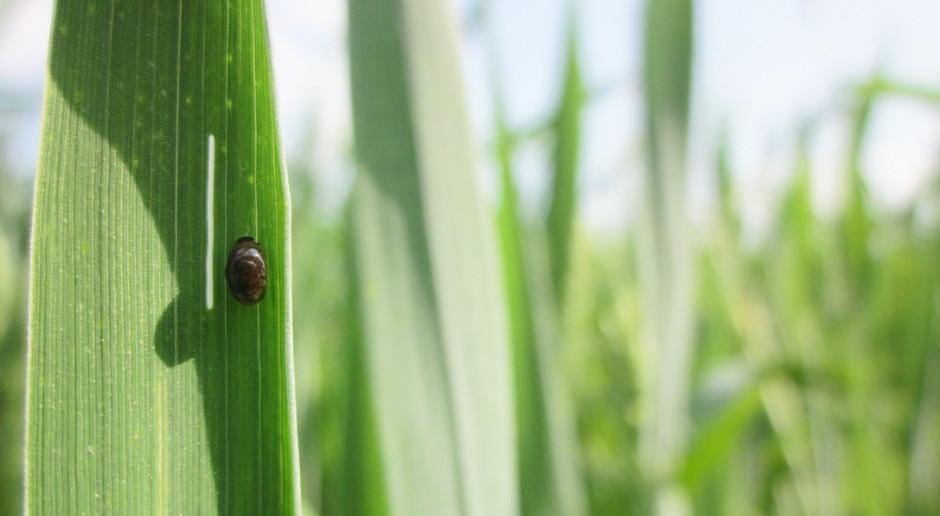 Gamma-cyhalotryna w nowym insektycydzie