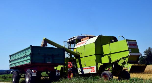 USDA: Większa światowa prognoza produkcji pszenicy i zbóż paszowych w sezonie 2020/2021