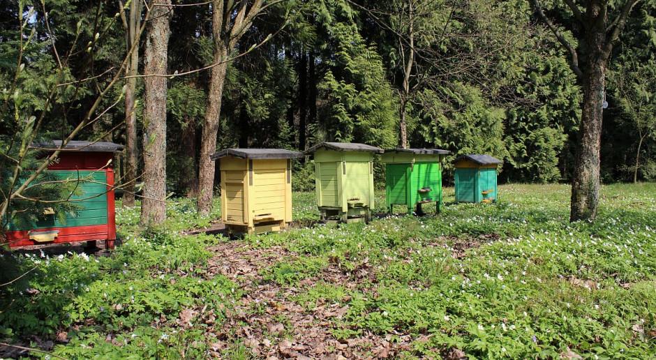 Sprawca zatrzymany za zatrucie pszczół
