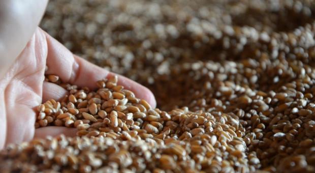 Jakie ceny zbóż w skupach?