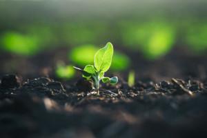 PE chce większej ilości ponownie wykorzystywanej wody dla rolnictwa