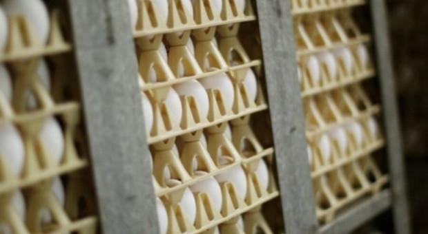 MRiRW: możliwy jest eksport polskich jaj do Tajlandii