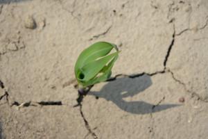 Zmiany klimatu – czego można się spodziewać?