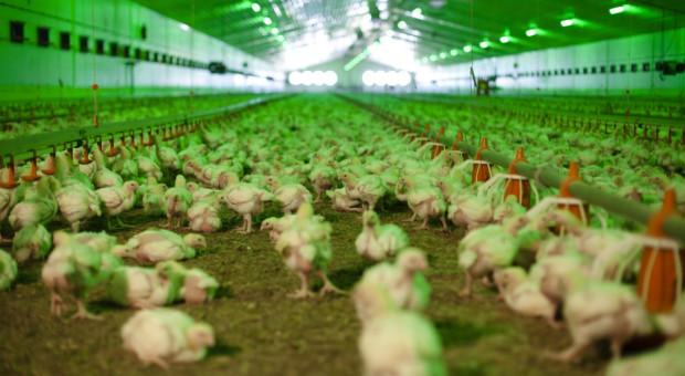 Branża: za kilka tygodni w Polsce może zabraknąć pasz dla drobiu