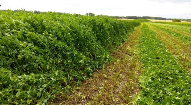 Jak zwiększyć produkcję pasz z użytków zielonych?