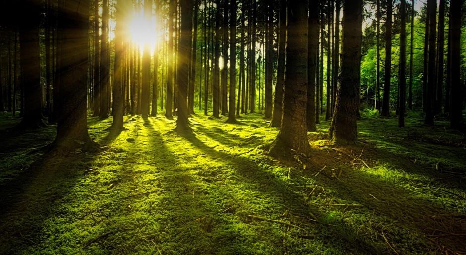 Globalna utrata lasów spowalnia