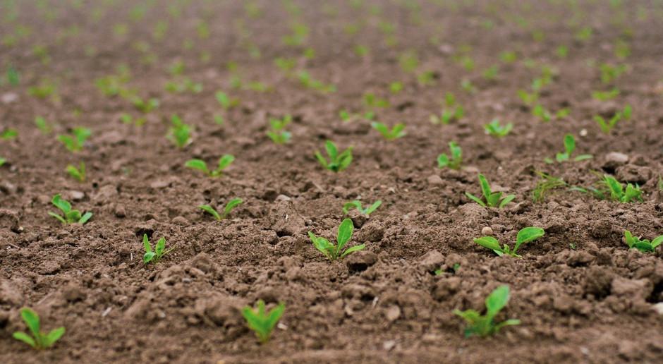 Rosja przeprowadziła zasiewy zbóż jarych na ponad 13 mln ha