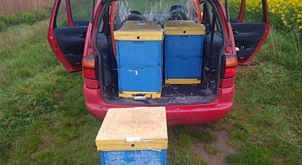 Pszczelarz kradł ule innym pszczelarzom