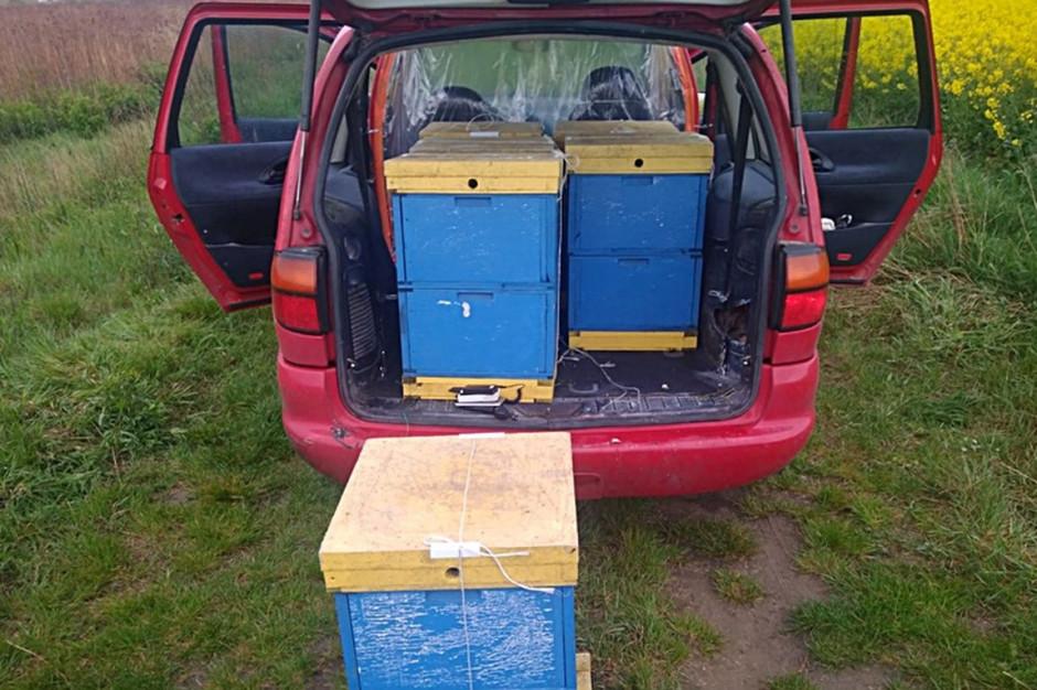 W aucie sprawcy znaleziono 6 skradzionych uli z pszczołami, Foto: KPPŚroda Śląska