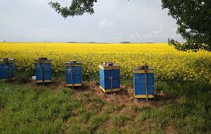 Sprawca wpadł, gdy okradał pszczelarzy pod Środą Śląską