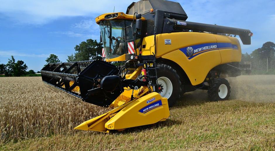 DRV: Zbiory pszenicy w Niemczech będą jeszcze mniejsze niż w ubiegłym roku