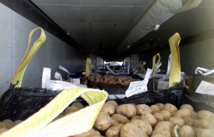 Wiezionych z Finlandii ziemniaków było w naczepie stanowczo zbyt dużo, Foto: WITD Poznań