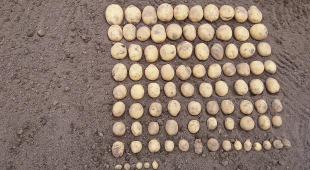 KE zezwala na wspólne niszczenie ziemniaków