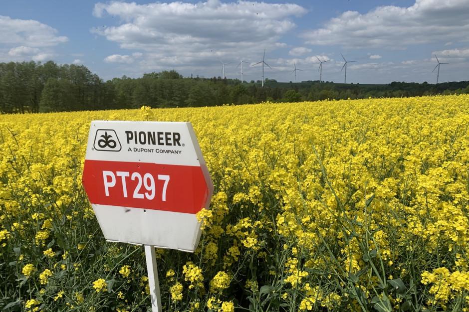 PT297 to propozycja z najnowszą linią genetyczną