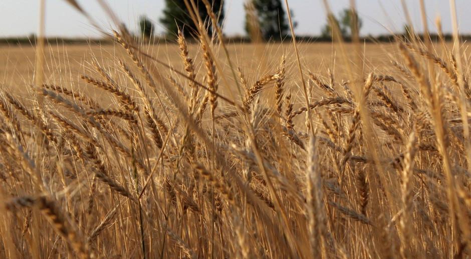 Kazachstan: Umiarkowany wzrost produkcji zboża