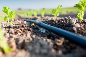 Wybieramy system do nawadniania upraw