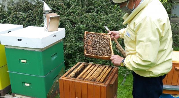 Co ty i ja możemy zrobić dla pszczół?
