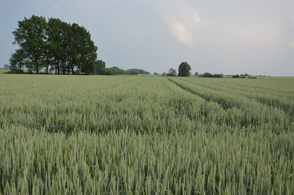 Dominującymi uprawami w gospodarstwie rolnika są pszenica ozima oraz kukurydza na ziarno. Ta ostatnia została wprowadzona, by przełamać krótki płodozmian składający się z pszenicy i rzepaku, jaki przez wiele lat stosował rolnik.