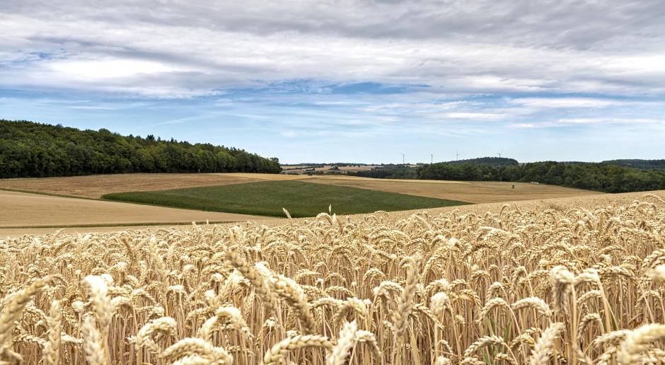 Eksport zbóż: Polska wyrzuciła Francuzów z ich tradycyjnych rynków